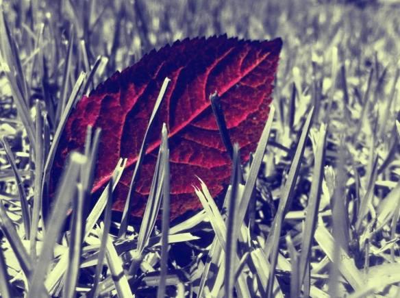 Hello Autumn...